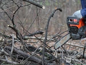 Почти полмиллиона рублей заплатит ветлужский браконьер за спиленные деревья