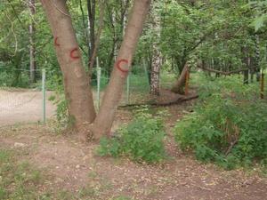В Нижнем Новгороде началось благоустройство парка имени Пушкина