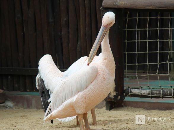 Выжить в пандемию: что происходило в закрытом зоопарке «Лимпопо» - фото 59