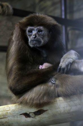 Зубр и гиббон родились в зоопарке Нижнего Новгорода - фото 6