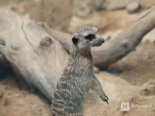 Выжить в пандемию: что происходило в закрытом зоопарке «Лимпопо» - фото 40