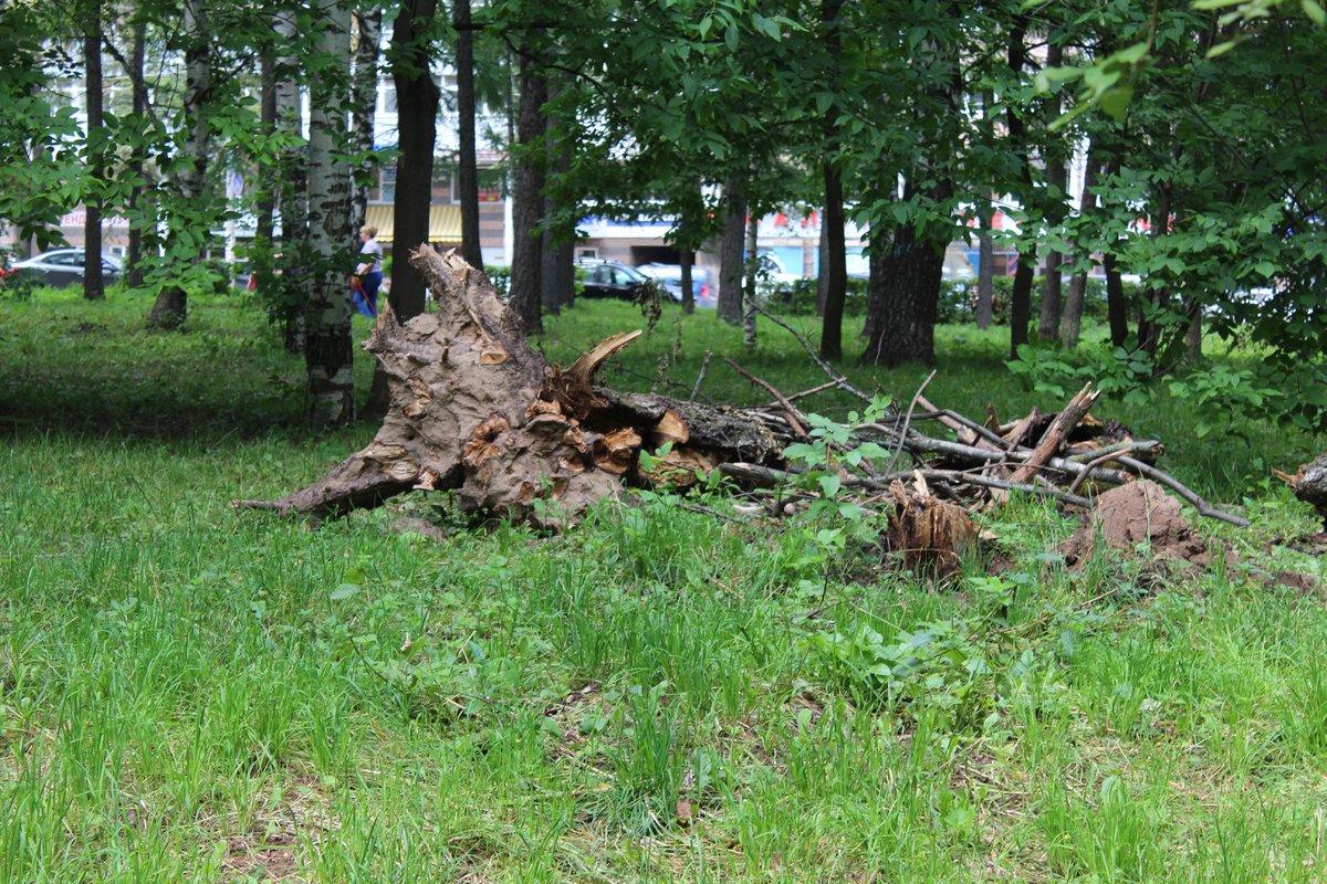 Уникальный городок и ценные деревья: как преобразится парк Пушкина - фото 6