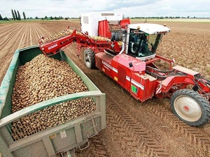 В Нижегородской области завершена уборка картофеля