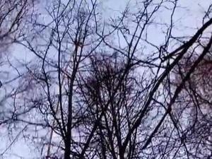 Операция по спасению котенка в Автозаводском парке увенчалась успехом