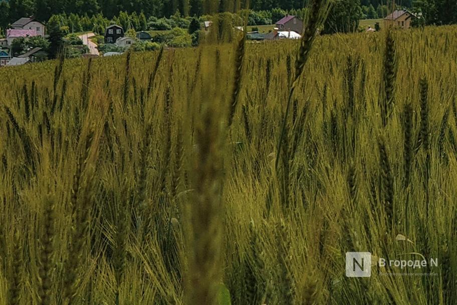 Полевые работы начаты в Нижегородской области  - фото 1