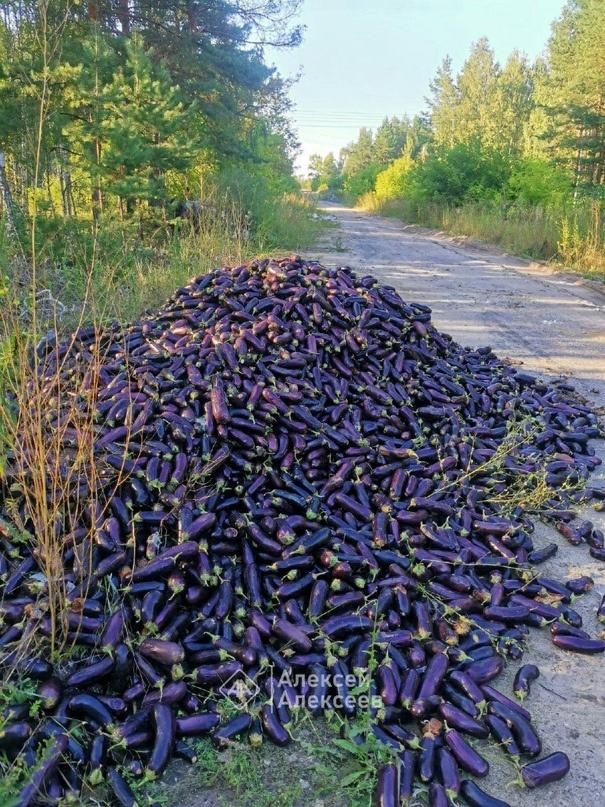 Гору баклажанов нашли в лесу под Дзержинском - фото 1
