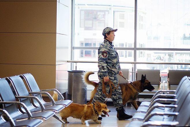 Искать наркотики на вокзале нижегородским полицейским помогает корги - фото 6