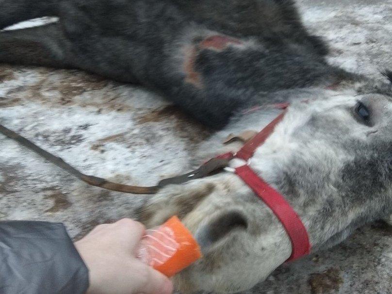 Владелица дзержинского «концлагеря» для лошадей прокомментировала  обвинения в свой адрес - фото 2