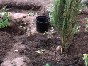 В Володарском районе женщину-фермера уличили в мошенничестве с землей