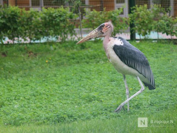 Уникальный вольер для марабу построили в нижегородском зоопарке - фото 17