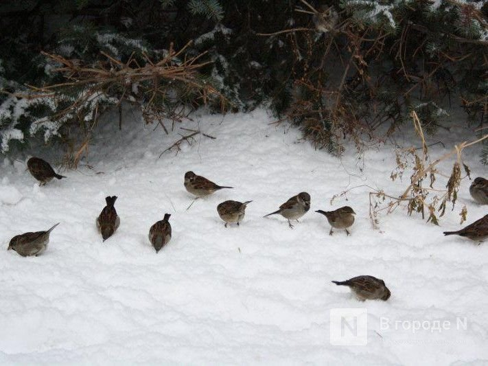 Ранняя весна ожидается в Нижегородской области в 2021 году - фото 1